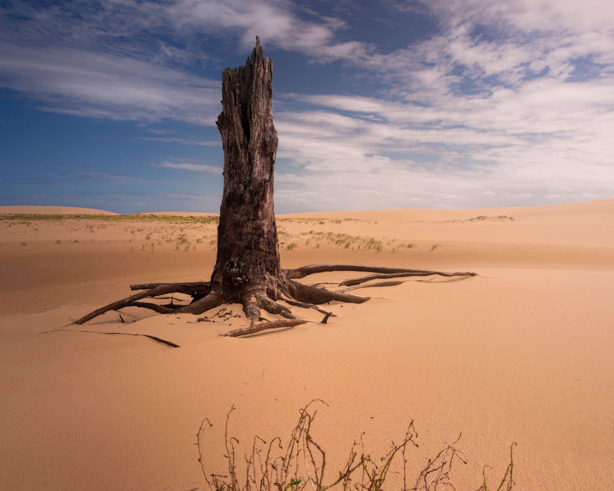 desert cover photo new