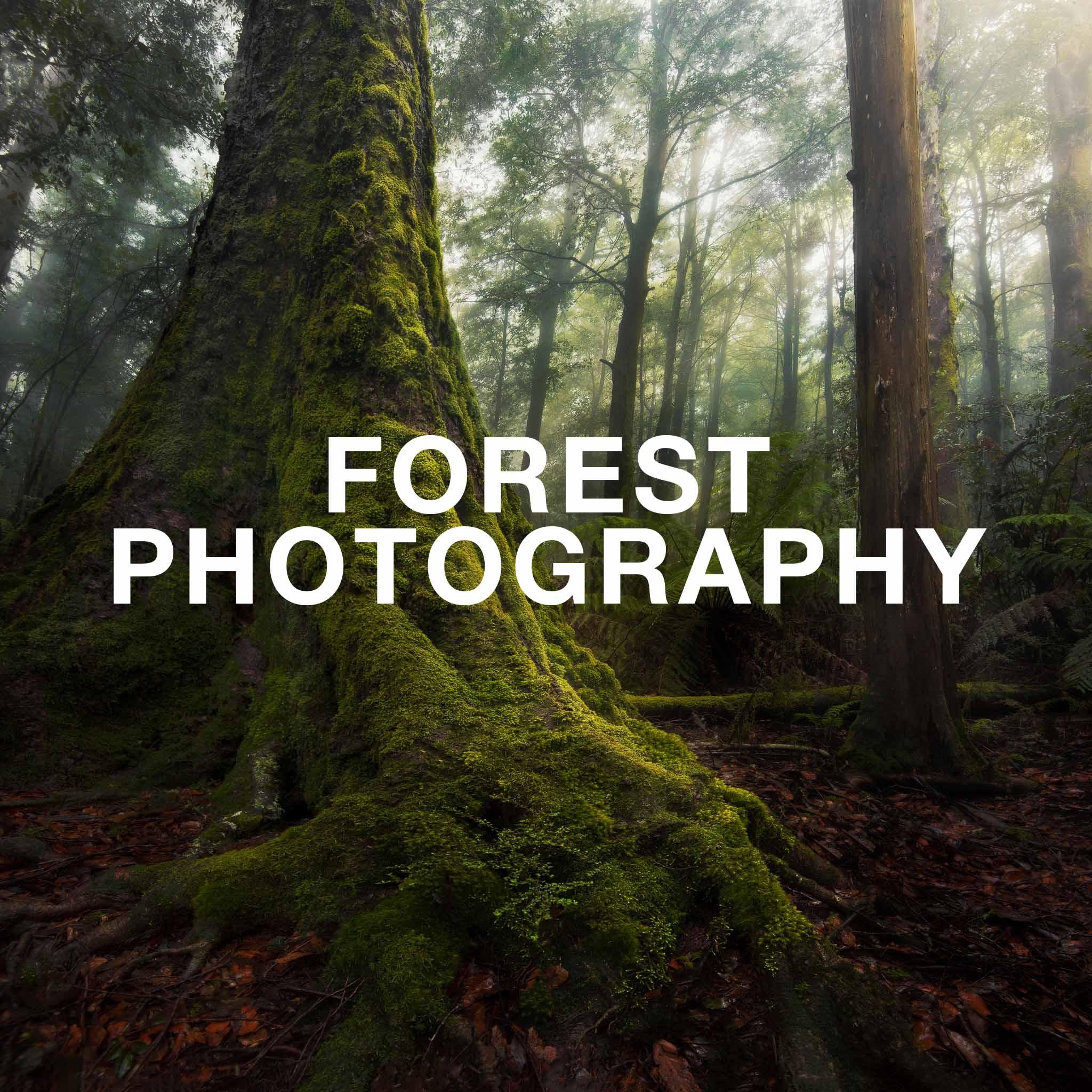 forest portfolio